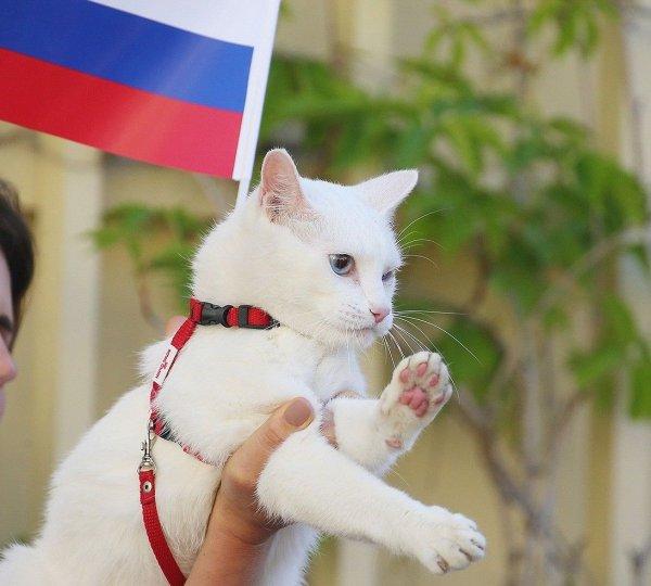 Милонов выступил за представление коту-оракулу Ахиллу пенсии